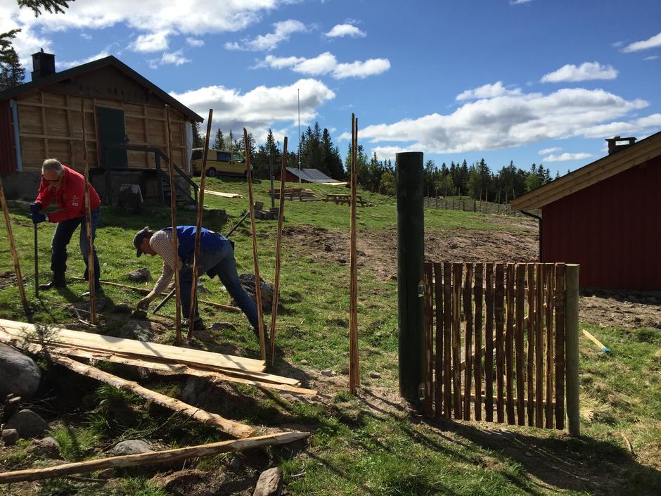 Staurene settes opp i par. Per Vold og Kåre Østgård fra Skogkarenes klubb bidro med dette.