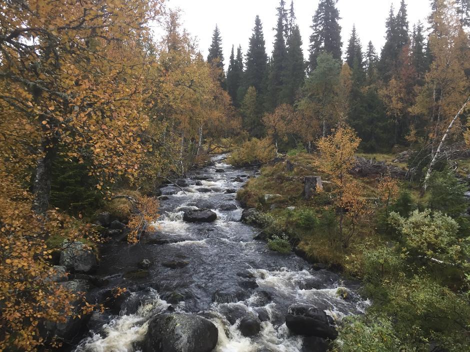 Skog og rennende vann.