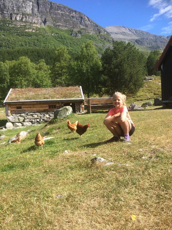 Høner i tunet på Renndølssetra