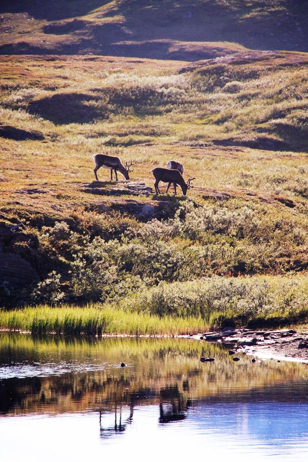 Junkerdal nasjonalpark, Rosnavassdraget.