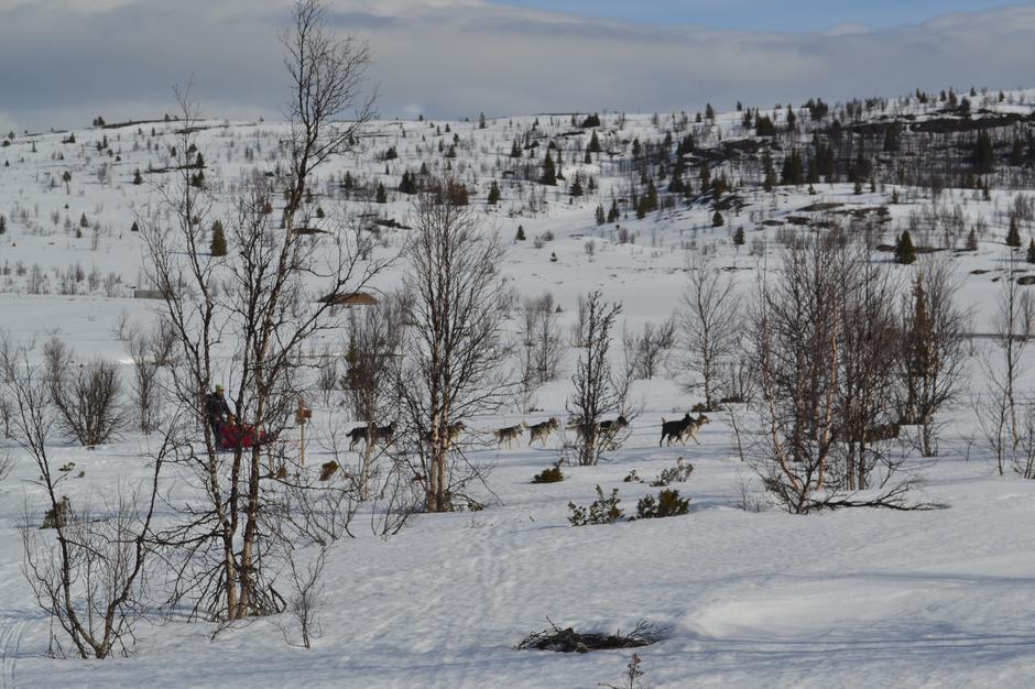Hundespann ved Vestfjellhytta
