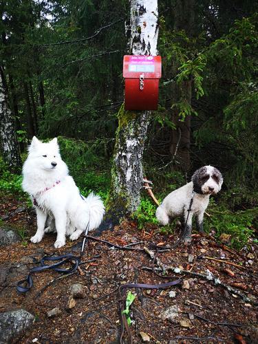 To gode venner ved postkassa på Høgåstoppen