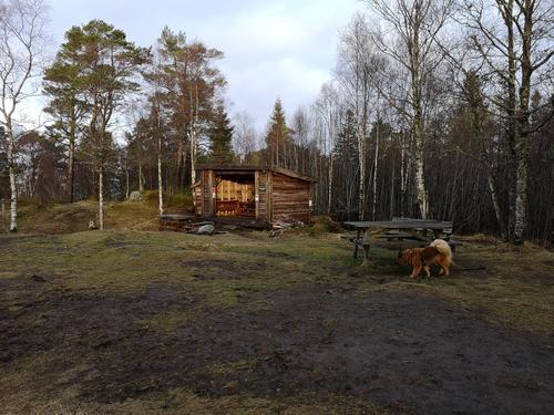 Turtips på Askøy