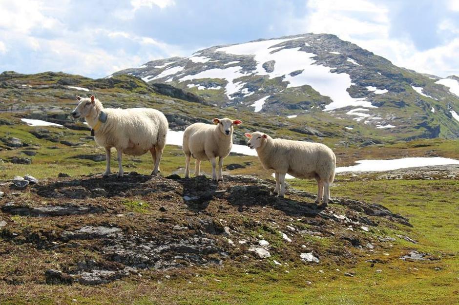 Mange firbeinte finn rikeleg med mat i 11-1200 meters høgde.