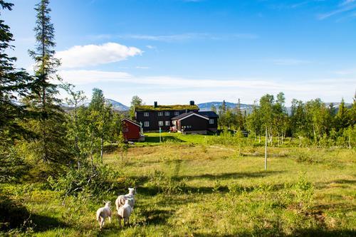 Rekordtidlig sommer i fjellet når hyttene åpner denne helga