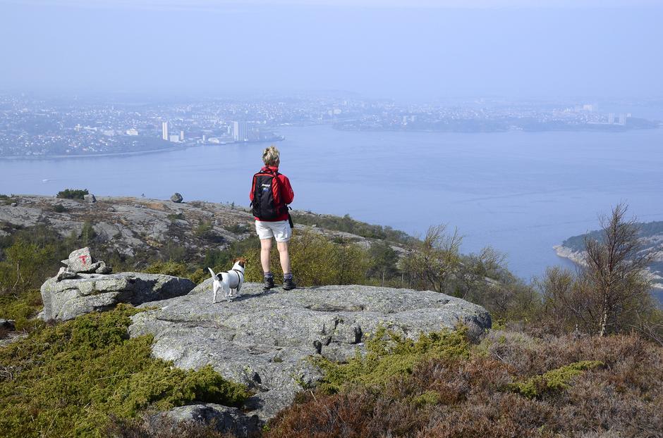 Utsikt fra Lifjell mot Gandsfjorden og Stavanger. Et yndet utsiktpunkt for både hund og hundeeier.