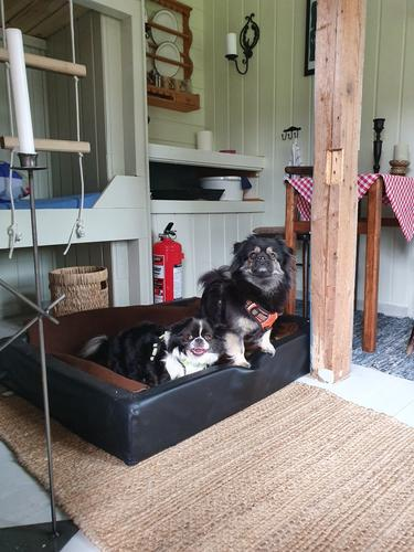 Hundehotell på Trollsvann