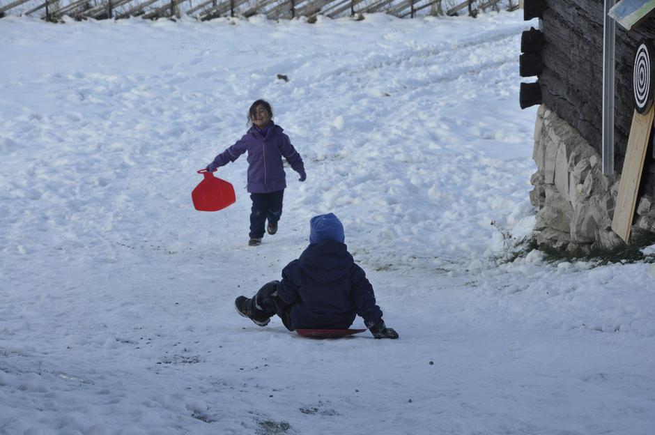 Barna storkoser seg i snøen som har kommet på Svukuriset Turisthytte.