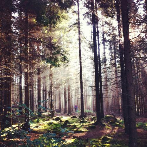 Soppjakt i Vagleskogen i Sandnes en fantastisk septembermorgen.