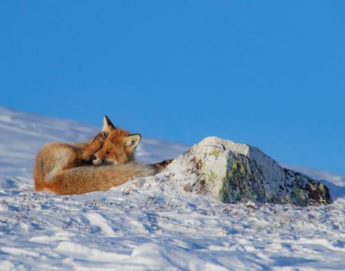 Statskog Fjelltjenesten: Is- og snøforhold i fjellet pr 11. april
