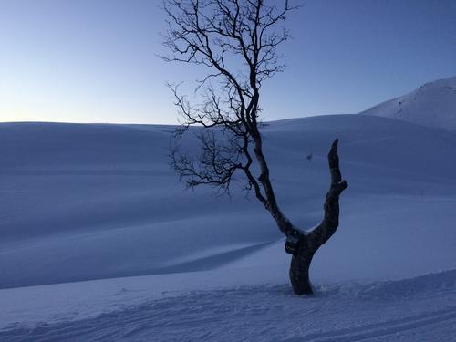 Koven, ved Kvæfjordeidet utenfor Harstad. Passe lang skitur, og utrolig morsom nedkjøring på retur.