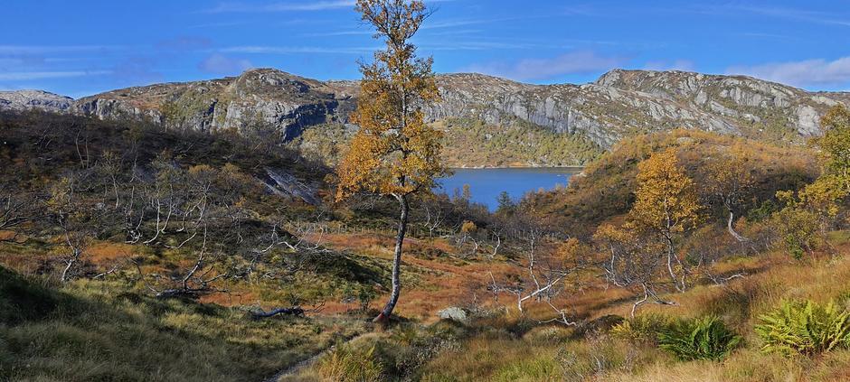 Fine farger i fjellet. Her på vei til Taumevatn.