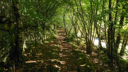 Kyrkjevegen i Fjell. Flott grønn løvskog langs elven.