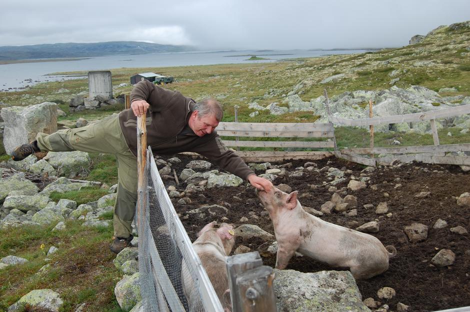 Vi har det grisegodt her på Sandhaug. Foto Kari Merete Horne