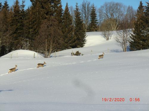 19. februar hadde Seniorgruppa skitur til Kjølafjellet