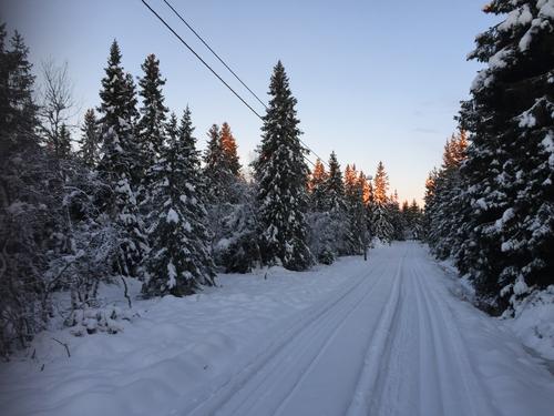 Uke 49: Skiløyper på Hedmarksvidda
