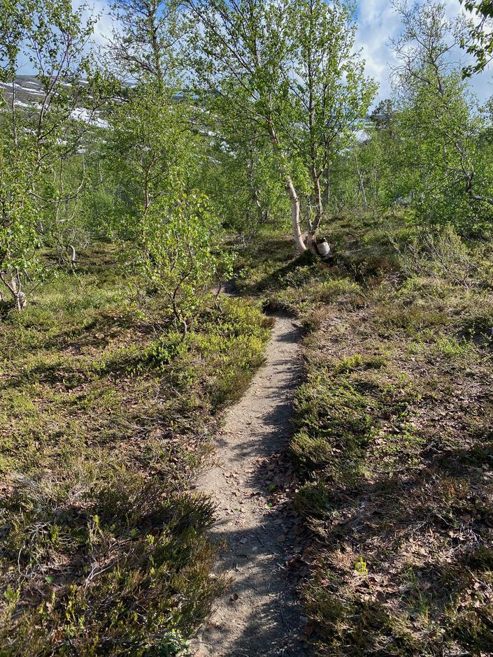 Stien til Pyttbua er ryddet etter at trær hadde falt over den i løpet av vinteren.