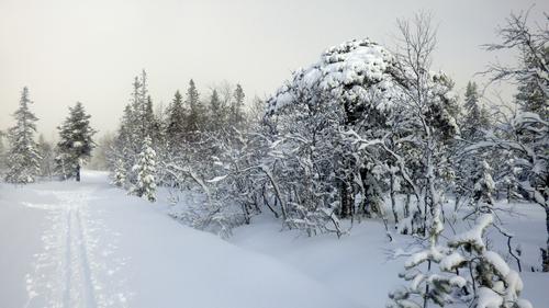 Tur til Vollkoia/Blåmyrkoia 22.02.17.