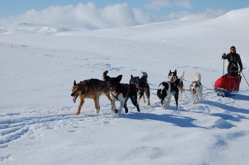 Hundeslede Foto: Johan Fegri