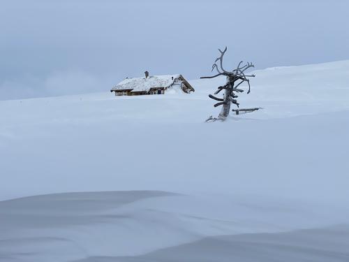 Føremelding uke 4: Hardangervidda/Rauhelleren