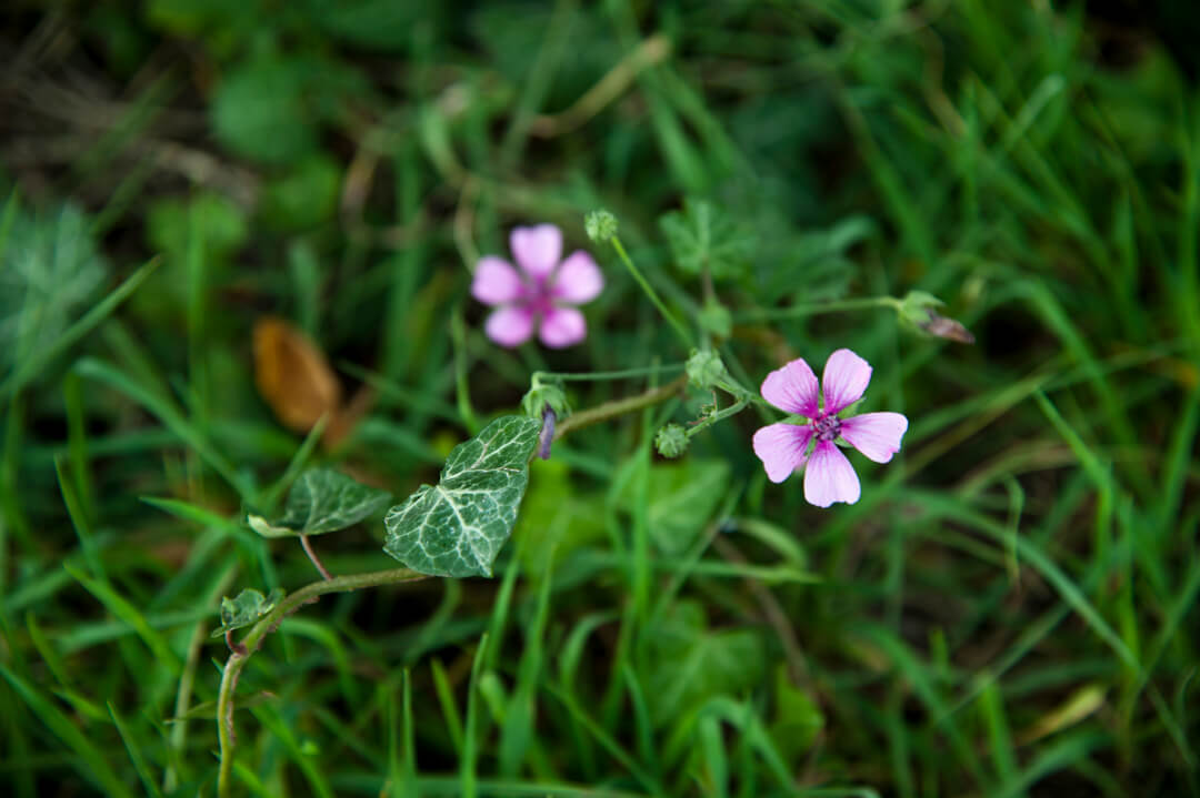 Phytoalimurgia experience in Tuscany