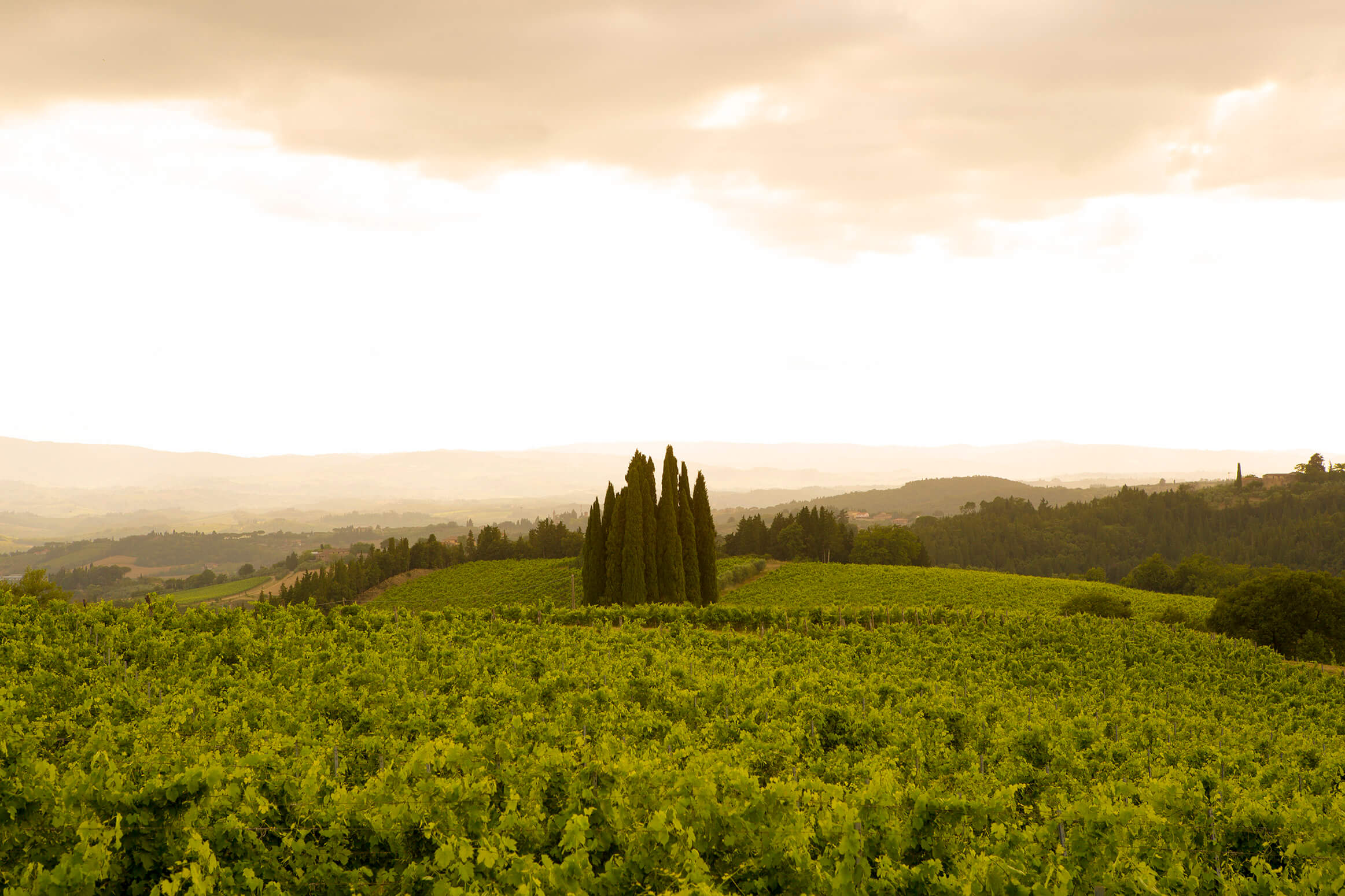 Luxury wine experience in Tuscany