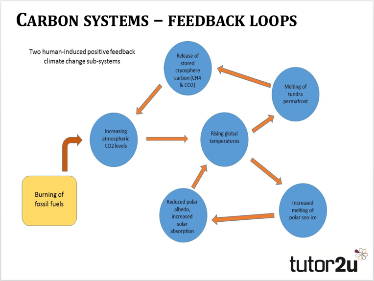 Carbon systems - feedback loops | tutor2u Geography