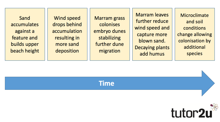 Coastal Systems - Factors Involved in Sand Dune… | Geography