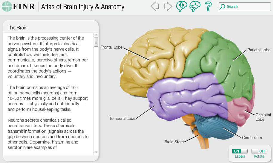 An Interactive Atlas Of The Brain Tutor2u Psychology