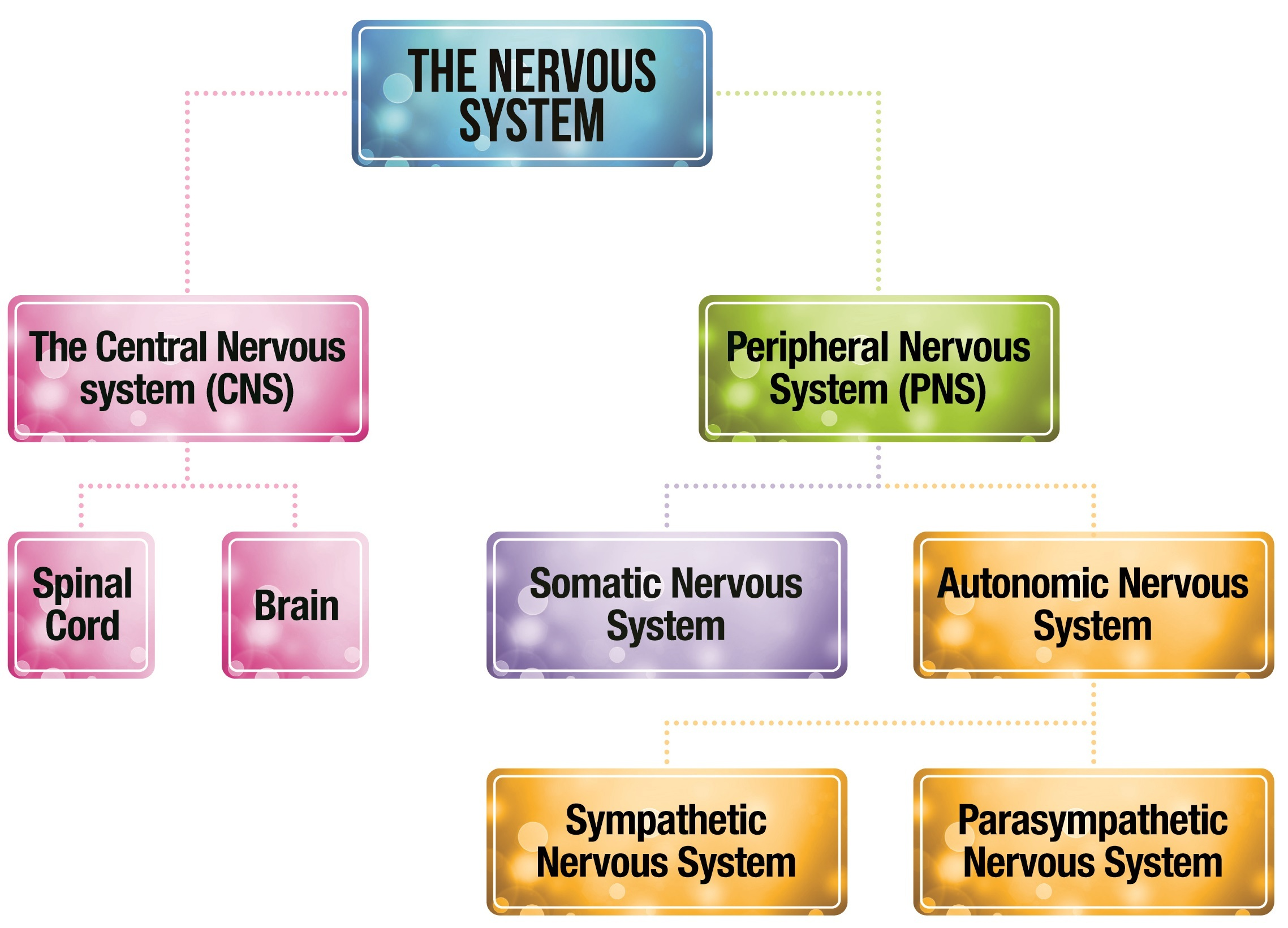 Structure Of Nervous System Diagram Block And Schematic Diagrams
