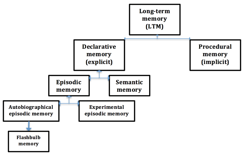 Episodic Procedural And Semantic Memory Tutor2u Psychology