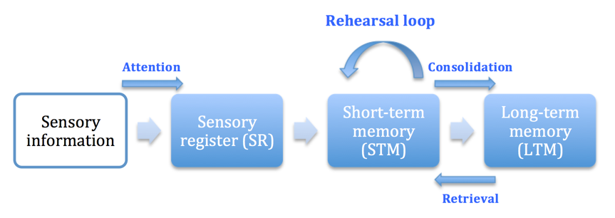 multi store model of memory essay The study of human memory stretches back at least 2,000 years to aristotle's early attempts to understand memory in his or multi-store, model of memory.