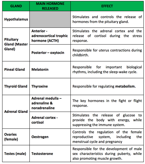 Biopsychology The Endocrine System Hormones Psychology Tutor2u