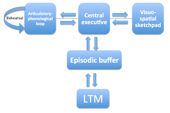What Is Working Memory >> Working Memory Model Psychology Tutor2u