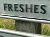 freshes