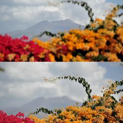 Volcano // Flowers