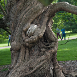 Knarled tree of life