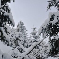 Kitzbuhel 2013