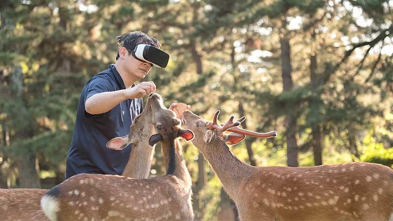 VR deer