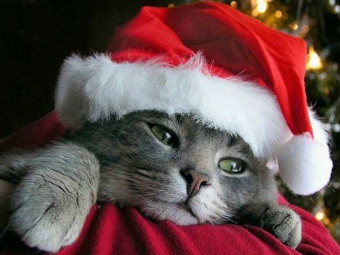 Token Christmas Cat