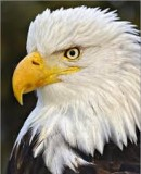 Benutzerbild von 5. Oberbefehlshaber Eagle