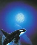 Benutzerbild von 5. Oberbefehlshaber Orca