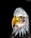 Truppenbild von Adler