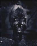 Truppenbild von Wolfsgilde