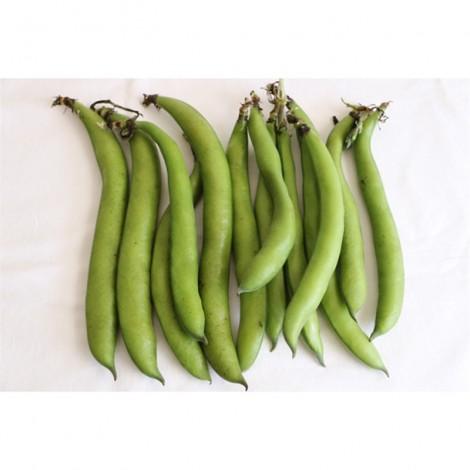 Broad Beans, Tunisia, Per Kg