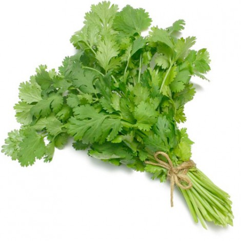 Green Coriander, UAE - Per Bundle