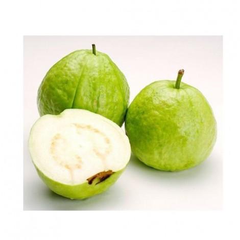 Guava, Vietnam, Per Kg