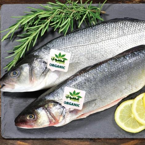 Sea Bass Fresh Organic, Per Kg, UAE