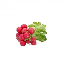 Radish Red - UAE - Per Bundle