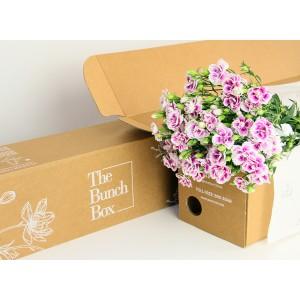 Dianthus Thia Bi Color Purple and white